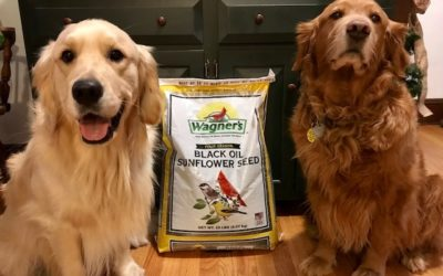 Ernest and Petey Say Chewy is for the Birds! #ChewyInfluencer
