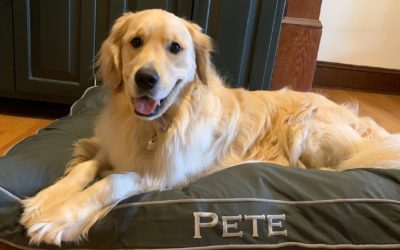 Pete's Product Review–Orvis Comfortfill Eco Dog Bed