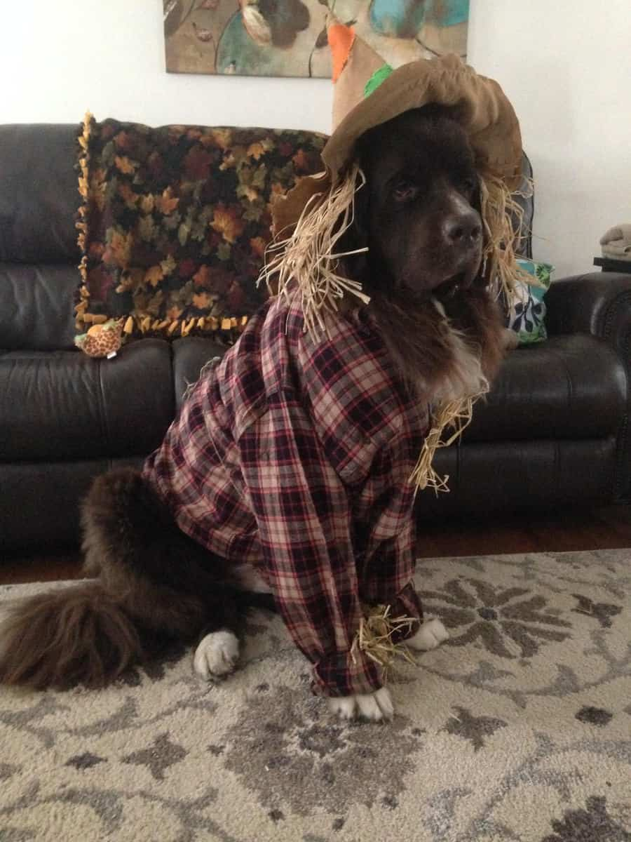 Adorable Therapy Animals in Halloween Costumes