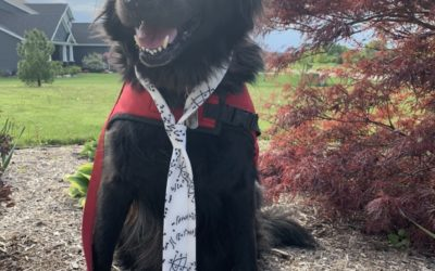 Meet Monty, Amazing Mobility Support Dog