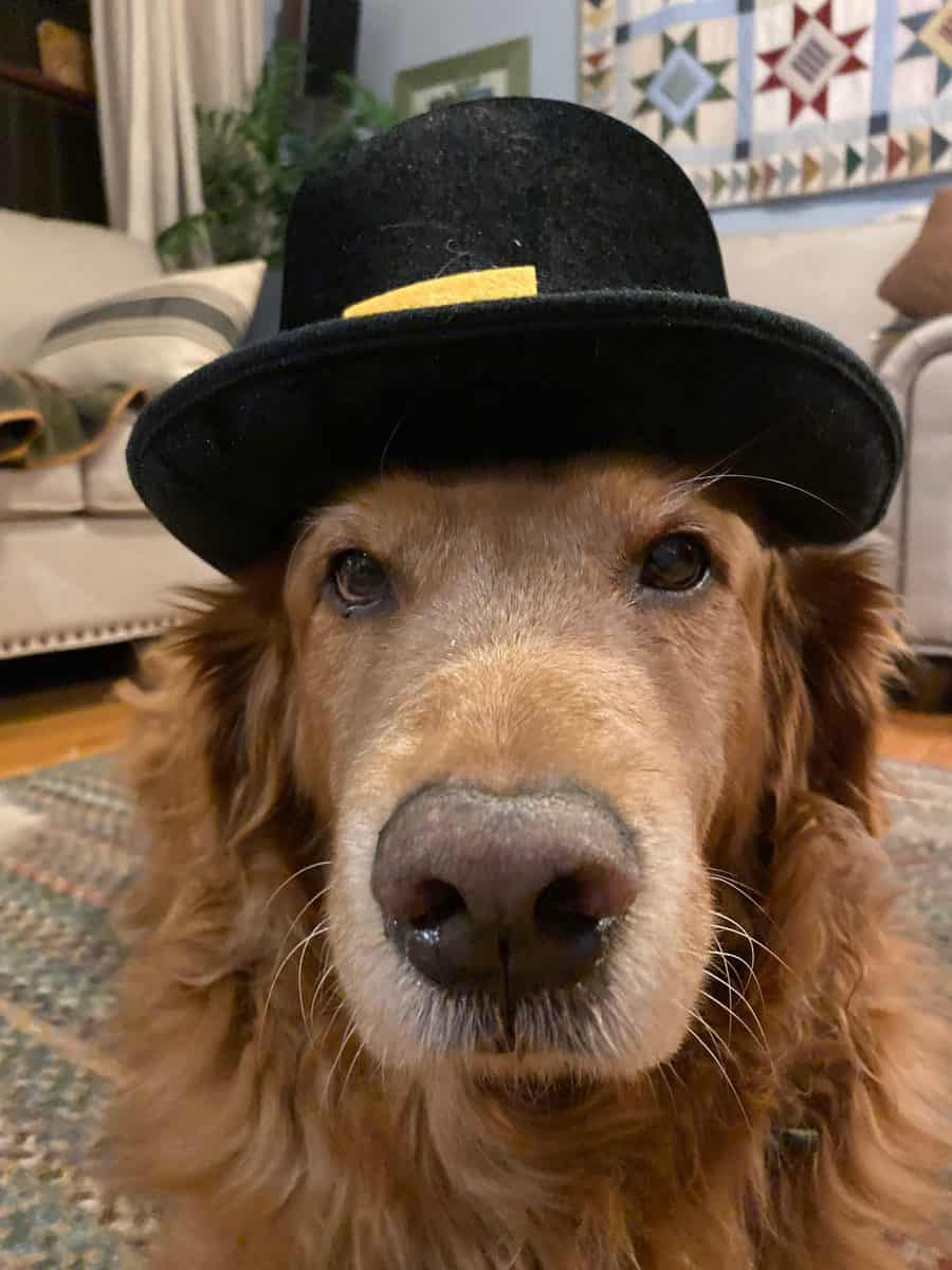 A Golden Thanksgiving