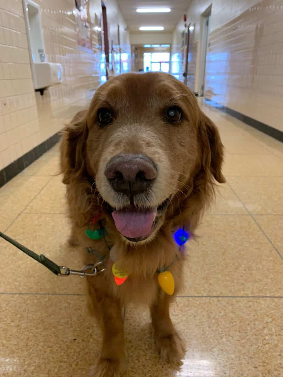 Paws in the Classroom–Ernest is a Good Boy Therapy Dog at Elementary School