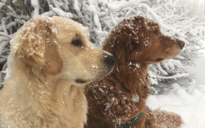 Let's WOOF about animals enjoying snow.