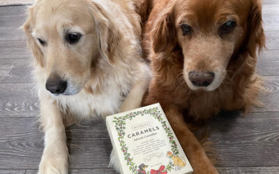 Do you like pets? holidays? caramels? Check this out!