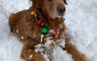 Christmas Lights, Cozy Hats, and Golden Retrievers Help Make Holidays Merry and Bright