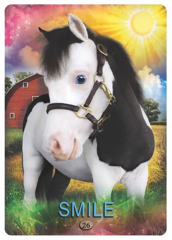 Get Inspired with Miniature Horse Love