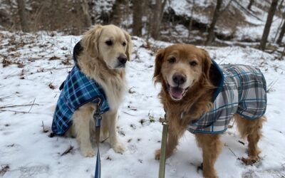 Let's WOOF about dogs wearing coats.