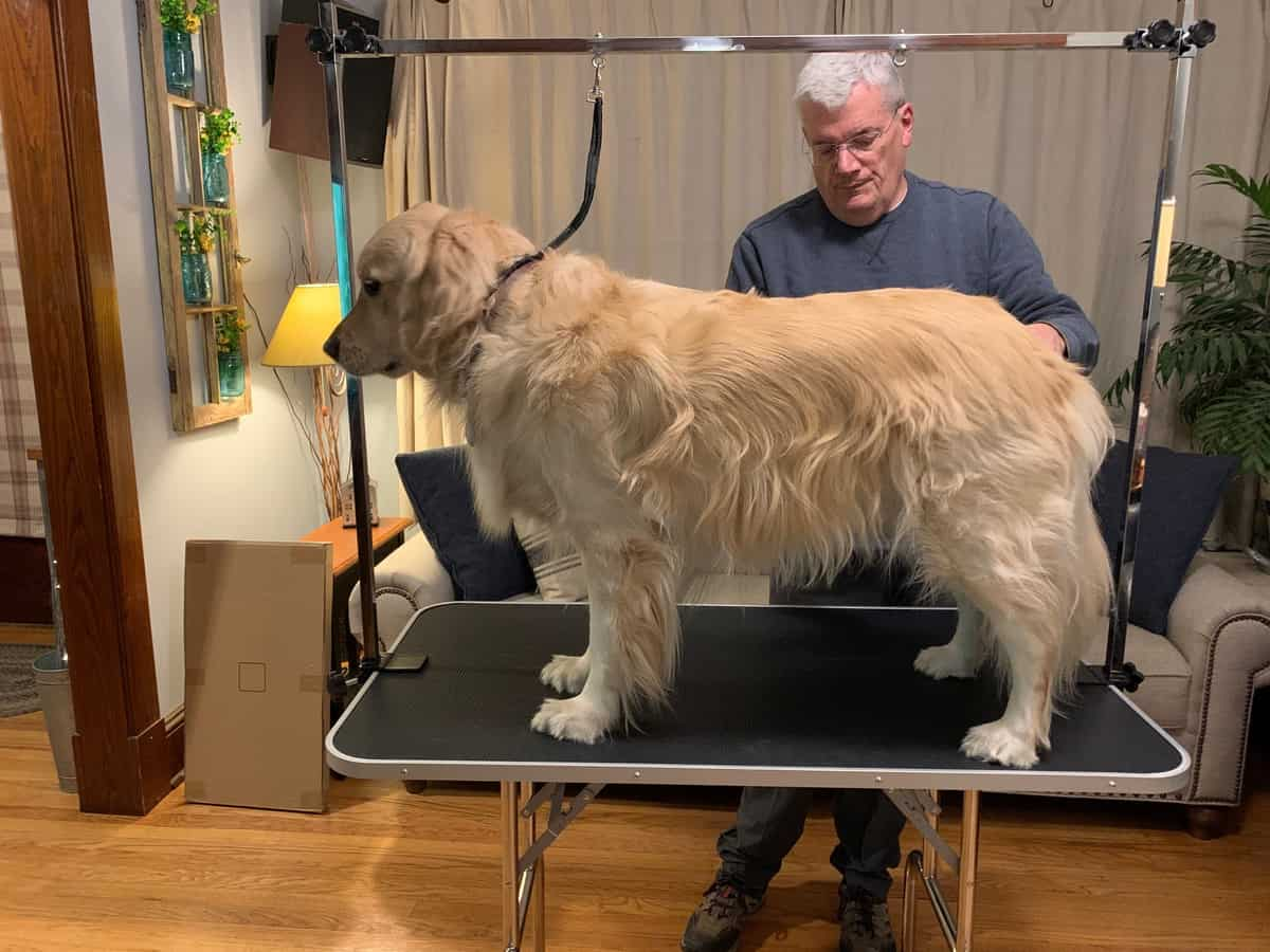 Lets WOOF about our new grooming table–Topeakmart Dog Grooming Table Review