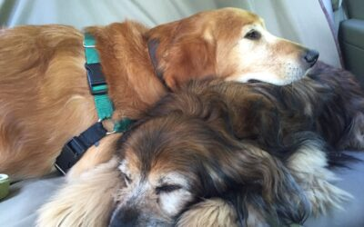 Let's WOOF about why shelter dogs can make great pets!
